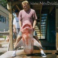 Shark Fishing Myrtle Beach